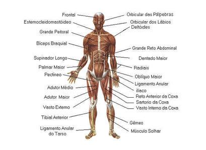 Funciones del encefalo humano