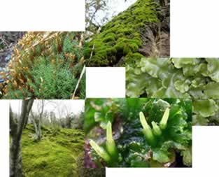 As briófitas são plantas pequenas e delicadas que vivem em ambientes úmidos e sombreados