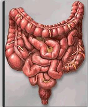 A Síndrome do Intestino Irritável acomete mais mulheres jovens