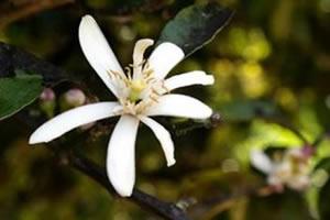 Determinadas flores possuem tanto gametas femininos quanto masculinos e podem se autofecundar ou executar reprodução cruzada.