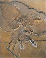 fóssil que mantém relação evolutiva entre répteis e aves.