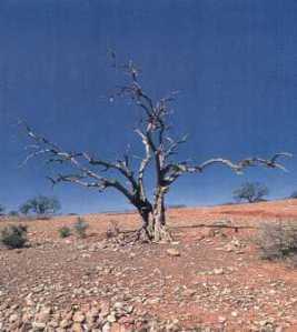 Área desertificada na África por causa da degradação do solo.