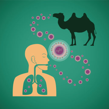 Acredita-se que a Mers possa ser transmitida também por animais, como o camelo