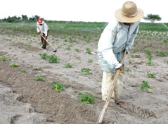 O trabalho no campo brasileiro