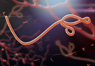 Os vírus são ou não seres vivos?