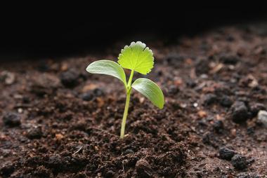 Os solos constituem-se como um importante recurso natural