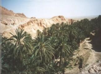 Em meio ao deserto, os oásis modificam drasticamente o panorama da paisagem do Oriente Médio.