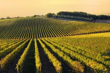 Cultivo e conservação do solo