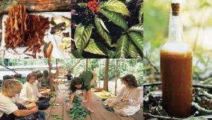 Apesar dos efeitos psicoativos, a ayahuaska não é considerada droga