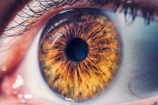 Características e limitações do olho humano ditam a forma como enxergamos o mundo