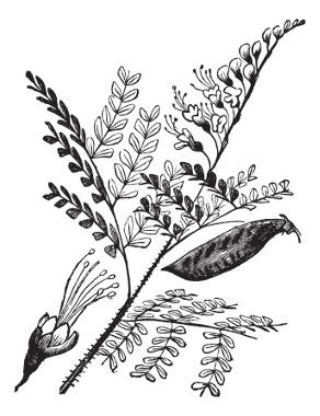 O pau-brasil (Caesalpinia echinata) foi o primeiro produto cultivado na colônia a trazer rentabilidade para a coroa portuguesa