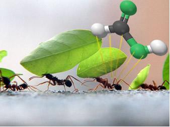 Na realidade, o nome oficial do ácido fórmico presente nas formigas é ácido metanoico