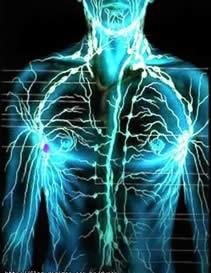 Agrupamento de células contendo canalículos linfóides.