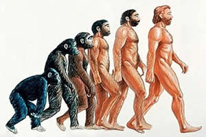 O macaco é ancestral do homem?