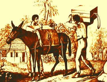 As mulas atravessavam longas estradas transportando a riqueza produzida na colônia.