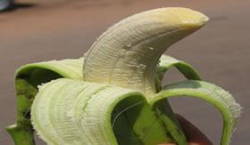 Banana verde, nem pensar!