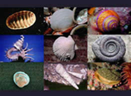 Representantes do Filo Mollusca.