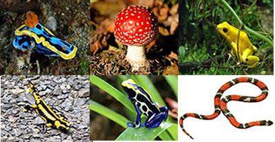 Alguns seres vivos fazem uso de cores vivas e marcantes para serem evitados pelos seus predadores