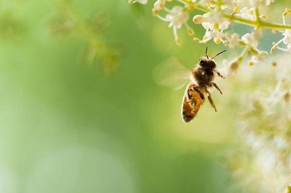 As abelhas são animais que apresentam valor ecológico e econômico.