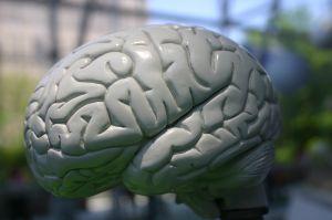 O QI avalia uma série de habilidades mentais, verbais e lógico-matemáticas.
