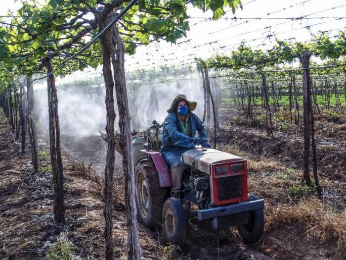 Apesar de nocivos à saúde, os agrotóxicos são bastante utilizados no Brasil e no mundo no combate a pragas e doenças nas plantações.*