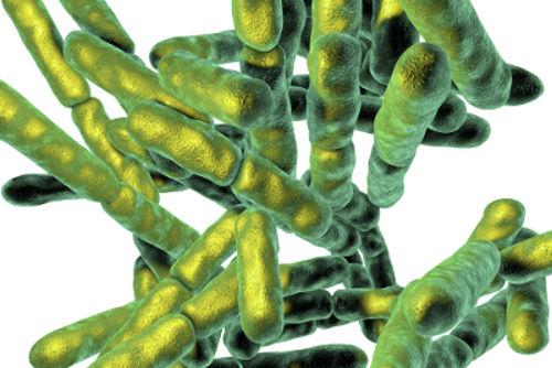 As bactérias são organismos sem núcleo definido