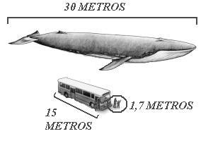 Resultado de imagem para baleia azul e homem comparação imagens