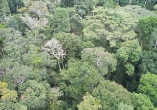 Aparentemente a floresta Amazônica é homogênea.