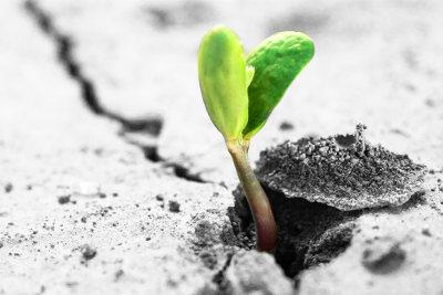 As plantas necessitam de alguns nutrientes para desenvolver-se