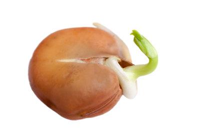 A semente garante nutrientes para o embrião