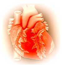 O coração: órgão que efetiva o transporte de nutrientes, rejeitos orgânicos e gases (oxigênio e gás carbônico).