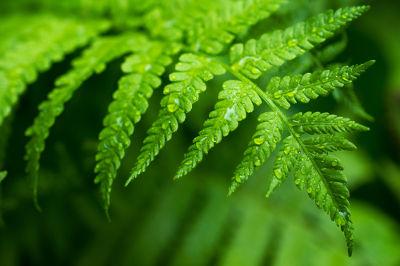 A coloração verde das plantas é resultado da presença de clorofila