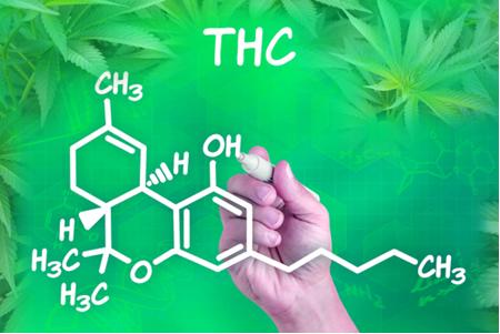 O THC é o princípio ativo mais potente da maconha