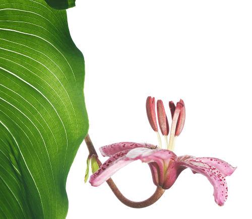 As plantas possuem um ciclo com alternância de gerações.