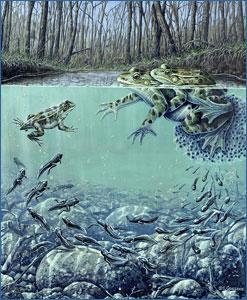 Anfíbios: animais com ciclo de vida dependente da água.