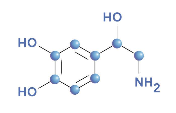 A noradrenalina é um composto da família das catecolaminas, assim como a dopamina e a adrenalina.