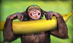 A banana é rica em hidrato de carbono.