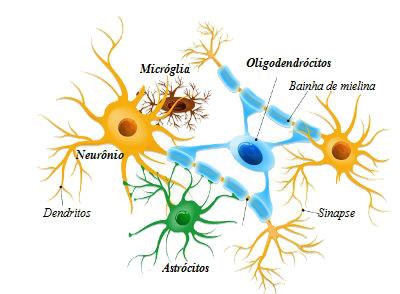 Observe algumas das principais células da glia