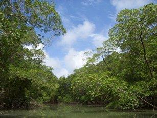 Floresta influenciada pelo clima equatorial