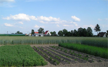 Rotação de culturas envolvendo o cultivo de batata, aveia, ervilha e centeio