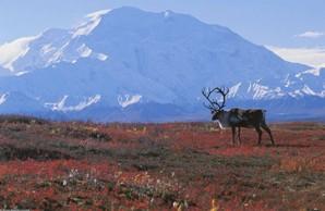 Típica paisagem de tundra.