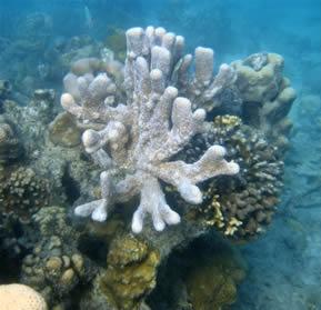 Corais: organismos formados por colônias de cnidários.