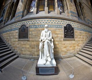 Estátua de Charles Darwin no Museu de História Natural de Londres