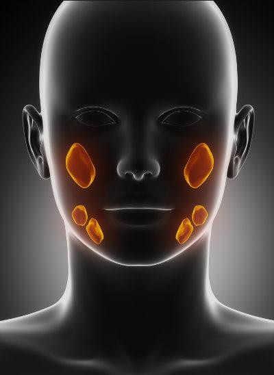 As glândulas salivares são responsáveis por produzir a saliva