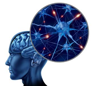 A condução dos estímulos nervosos por células especializadas do sistema nervoso