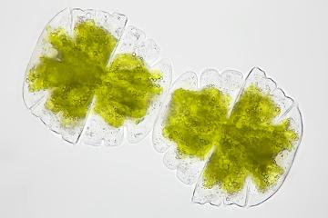 De acordo com a teoria celular, todos os seres vivos são compostos por células