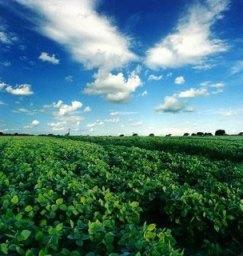 Revolução verde promove o aumento de alimentos.