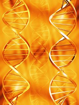 O DNA é o ácido nucleico que contém as informações de cada indivíduo