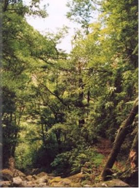 Floresta mediterrânea primitiva da Era Terciária.