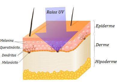Resultado de imagem para função da pele